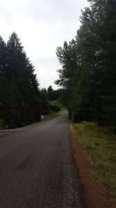 Oh weird, more nice places to run around Woodinville. This was on my way to the horse path.