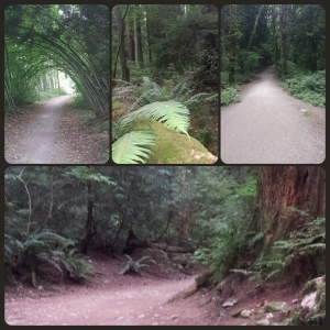 The beautiful (and somewhat dangerous, if you're me) trails in Vancouver.